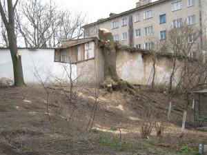 treegrushevskiy