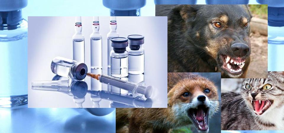 """Результат пошуку зображень за запитом """"вакцинація проти сказу  для диких м'ясоїдних тварин"""""""